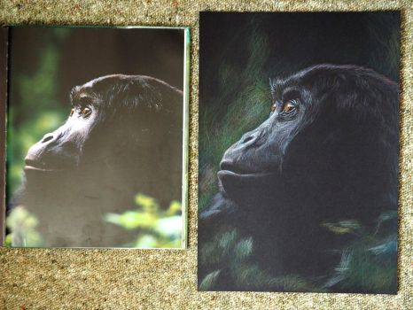 Gorilla with reference photo by Jacia