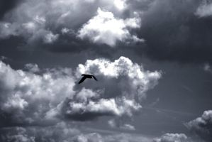Brimham rocks bird 2 by Distorted-Colours