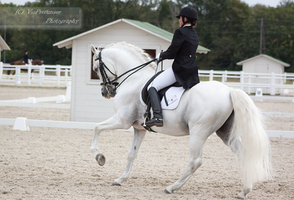 Dressage Cup_169 by CalyHoney