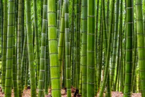 Bamboo Legends by AndrewShoemaker