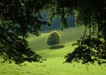 TREE THROUGH THE TREES by TADBEER