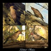Gilded Flicker by Violet-Kleinert