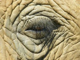 Elephants Eye I by Jenvanw