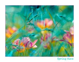 Spring time by valeriemonthuit