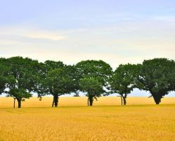 The landscape of Denmark by Cestmann