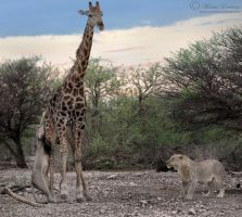 Tackling a Giant by MorkelErasmus