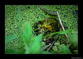 Green Frog Prince by AmbientExposures