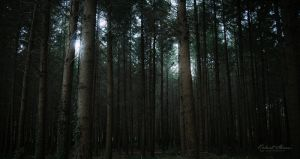 Forest Is My Throne by r-maric