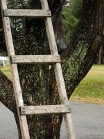 Object _ ladder part by Aimelle-Stock