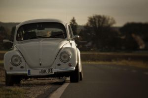 Bug resting. by Querfahrer