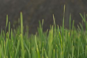blurry reeds by mb-neo