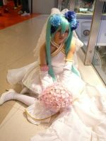 miku cosplay cw31 by bleach-1210