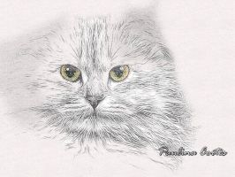 Kitty my cat by Paulina44
