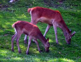 Sister and Brother Deer l by Shanna-the-Freak