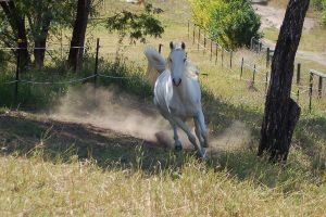 Horse stock - Taking off 2 by Chunga-Stock