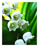 Lily of the Valley by inacom