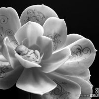 Baby in flower by iheb003