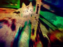 splash cat by nikolass by nikolass83gianni