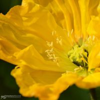 thrilled yellow by akthuro