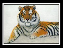Siberian Tiger3 by photospider