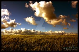 cornfield2 by SuperMario82