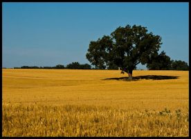Alone in a field of gold by Roland3791
