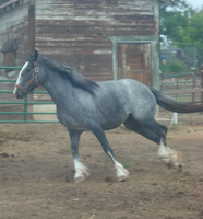 Blue Roan Stock 5 by tragedyseen