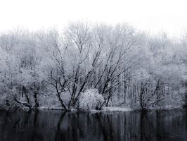 Snowy Trees Alongside a River by snader