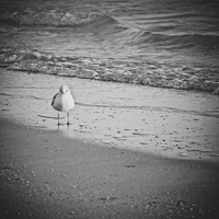 seagull by DianaGentili