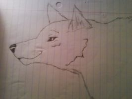 Wolf Drawing by maxst5011