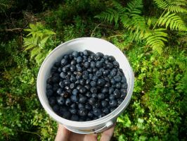 blueberries - you want some? by Akinaro