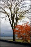 Autumn in Helsinki by eswendel