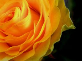 Gentle Yellow by kanes