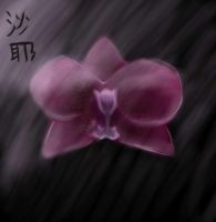 Dad\'s Orchid by Saya024