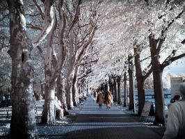 Late Afternoon Walk Infrared by MichiLauke