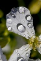 Droplets by thevictor2225