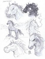 Horse warm up sketches by JoeyVazquez