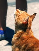 Un Gatto in Sardegna by StandsWithAPencil