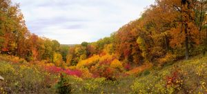 Panoramic park view.img595 by harrietsfriend