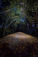 Enlighted woods. by OloS
