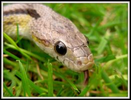 Snake in the Grass by Gecko-Girl