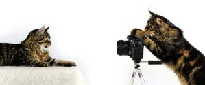 The Photographer... a CAT! by Manu34