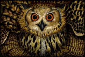 Cape Eagle Owl by starmist