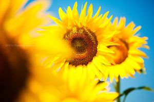 Sunny by PinkFishGR