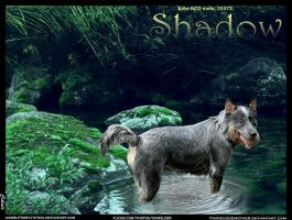 Shadow by JuneButterfly-stock