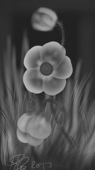 Grey Scale Flowers by Brownie3113