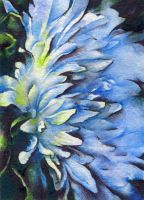 White aster in the evening. ACEO by OlgaSternik