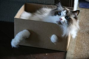 gus in a box by mcm1011