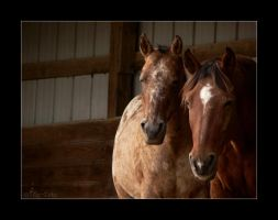 Sidney and Topper - 4 by ElaineSeleneStock