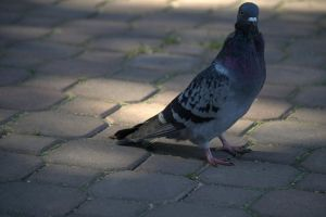 Pidgin by EaGle1337